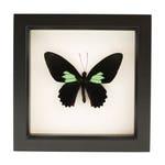Framed Butterfly Art Emerald Heart Cattle heart