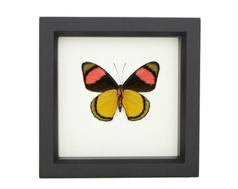 Framed Butterfly vintage butterfly 1930s lace butterfly vintage framed gift butterfly wall art insect art framed lace lace butterfly