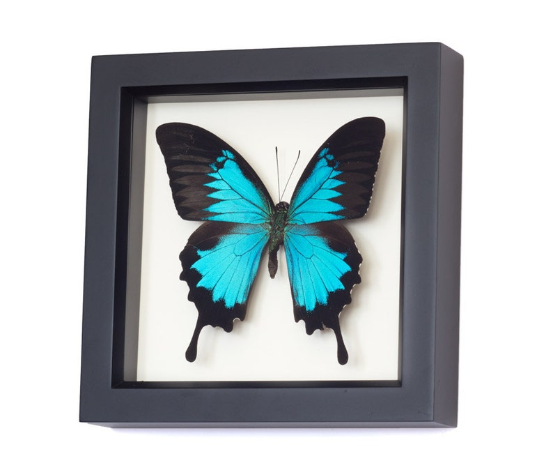 Butterfly Wall Art Framed Butterflies Swallowtail Display image 0