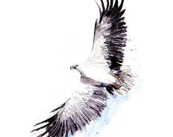 White-bellied Sea Eagle **Limited Edition**  Art Print A3, A2, A1 & A0 bird watercolour illustration giclee art print