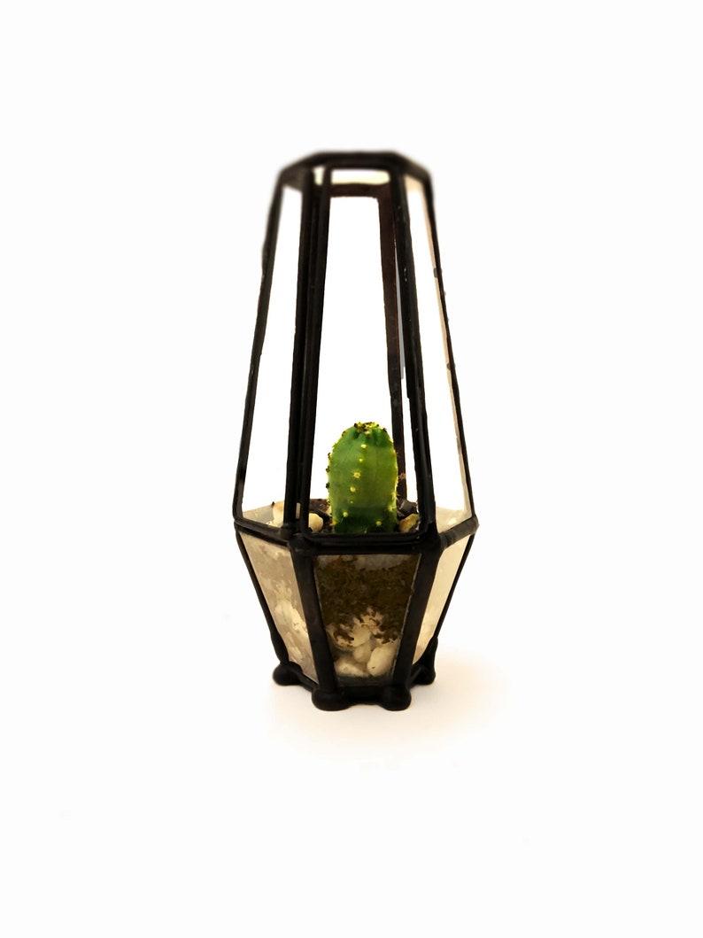 Pre-Assembled Cacti Terrarium Enclosed Landscape Desktop Garden Cute Cacti Terrarium Kit