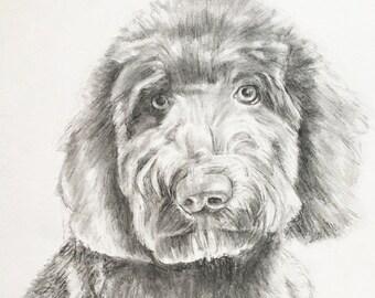 Dog Portrait Custom Sketch