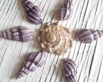 Seashell Mosaic Tiles 7 Piece Set Purple Oyster Shell