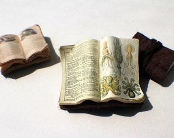 Miniature Open Book --- Octopus