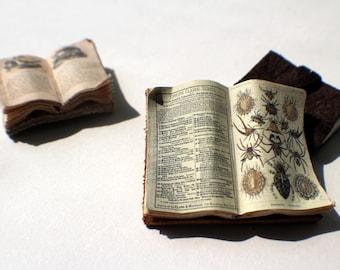 Miniature Open Book --- Arachnids