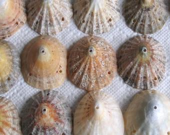 19 Sea Shells Dangles Connectors 4 Holes Drilled 1.5mm holes jewellery Craft Supplies (1741)