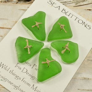 Six shades of pale green....a set of six double drilled sea foam green sea glass buttons from Maine