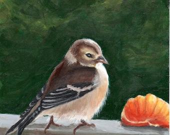 SALE!  Fine Art Print, Sunlit Goldfinch Bird and orange