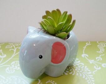 Elephant Succulent Faux Arrangement in Ceramic Planter featuring One Faux Plant, Desk or Shelf Decor, Dorm Decor, Hostess Gift, Gift Idea