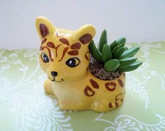 Colorful Leopard Succulent Faux Arrangement in Ceramic Planter Featuring 1 Faux Succulent, Get Well Gift, Desk, Home, Office or Shelf Decor