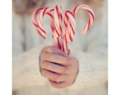 candy cane christmas photography / holiday decor, hands, peppermint, stripes, child, winter, red, white / fine art photo