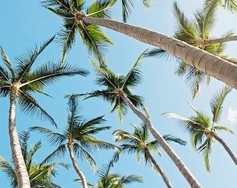 tropical wall art, palm tree photography, beach wall art, beach decor, nature photography, travel photography, blue wall art / palms up