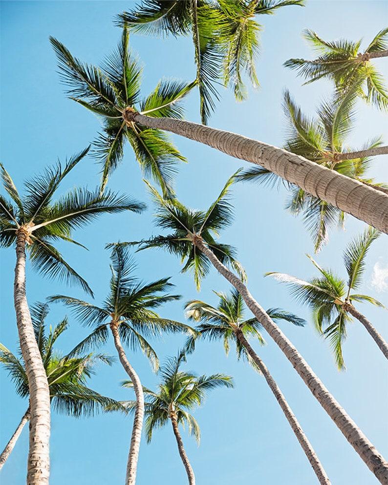 tropical wall art palm tree photography beach wall art image 0