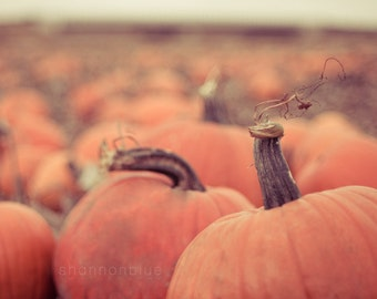 pumpkin patch nature photography / halloween, fall, autumn, farm, harvest, orange, grow your own food / at the pumpkin patch / 8x10