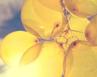 yellow balloon photography / sunny, lemon yellow, blue sky, birthday, party, sun, celebrate / shine through / 8x10 fine art photo