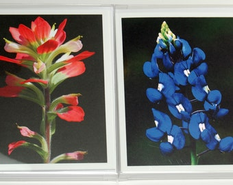 Texas Wildflowers Note Card Set, Blank Greeting Cards for the Gardener, Nature Lover or Art Lover, Bluebonnet and TX Paintbrush Nature Card