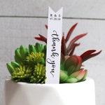 Thank You Succulent Tag | Succulent Stakes | Wedding Favors | Bridal Shower Favor | Baby Shower Favor | Succulent Favor | Favor Tags (S004)
