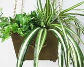 Vintage Brass Indoor Outdoor Hanging Planter Pot Home Accent Vintage Home and Living Brass Display Planter Hanging Indoor Garden Accent