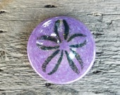 Purple Sand Dollar, Solid...
