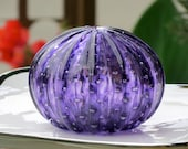 Purple Sea Urchin Shell S...