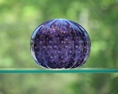 Purple Sea Urchin Shell S...