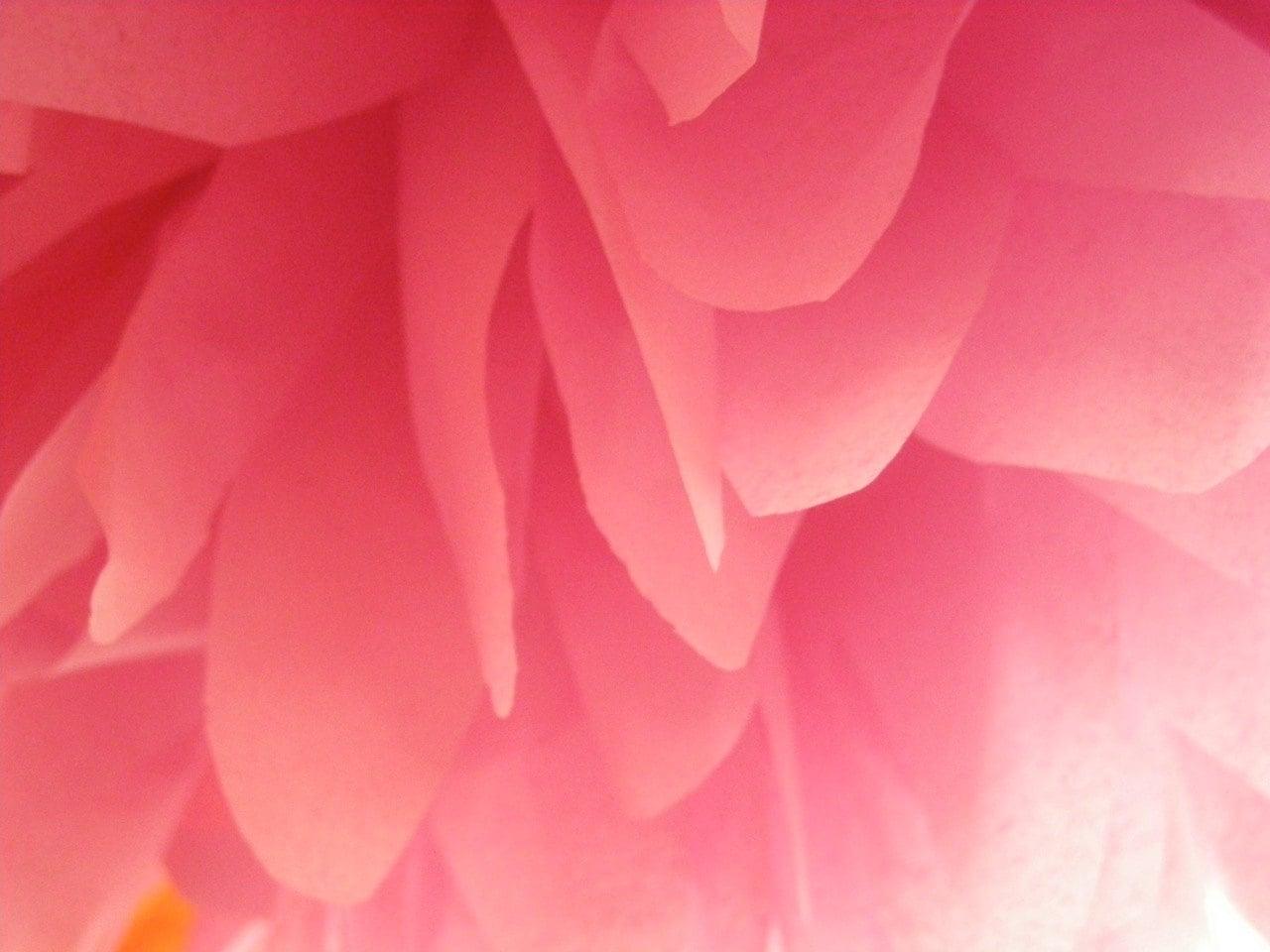 Hibiscus Tissue Paper Pompom Wedding Decorations Hawaiian Luau Etsy