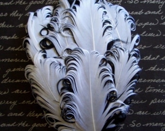 Feathers - 1 White and Black Curled Goose Feather Pad - Nagorie Feather Pad