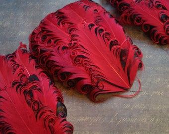 SET OF 5 - Nagorie Feather Pads  - Red on Black Curled Goose Feather Pads