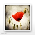 """Deluxe Signed 8""""x8"""" Print - Papaver"""