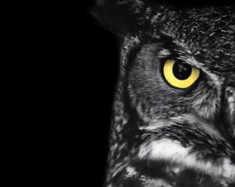 "Great Horned Owl Photo - ""Ladybird"" - 5x7 Black and White Bird Photography Print - Minimal Animal Art"