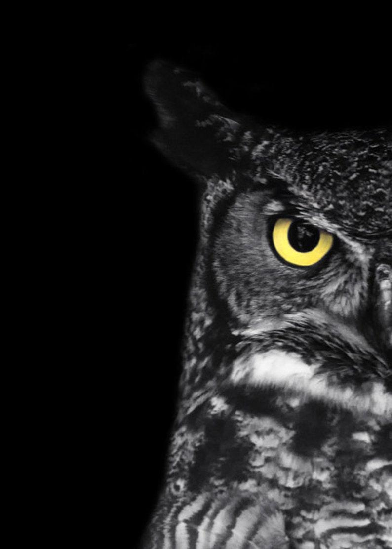 Great horned owl photo ladybird black and white bird photography print minimal animal art