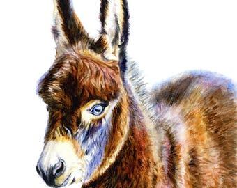 Donkey Colt Foal Art Watercolor Painting Print