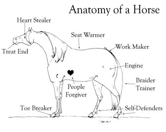 "Anatomy of  Horse 11"" X 14"" Print"