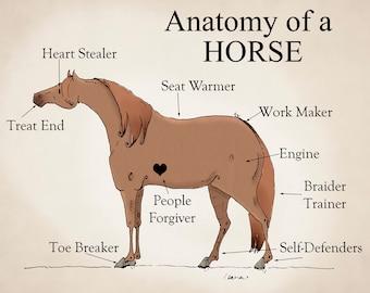 "Anatomy of  Horse 11"" X 14"" Print"