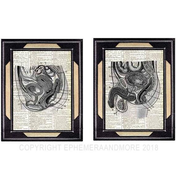 Becken weiblichen und männlichen Kunstdrucke Anatomie | Etsy