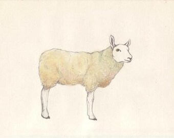 A sheep - postcard