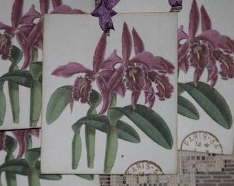 Lavender Iris Flower Gift Tags