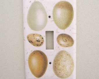 Single bird egg study light switch cover switchplate
