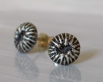 Sea Shell sterling silver post earrings