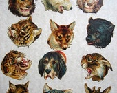 One lot of 12 Antique embossed die cuts (cut outs, scraps) of all different animal heads, 1910 era, French