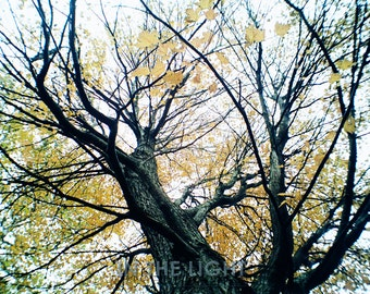 Looking up in the Fall - fine art photography