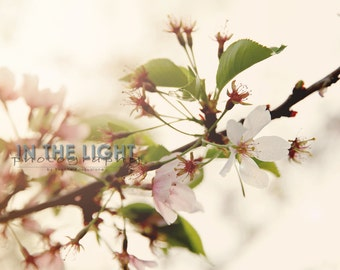 Spring Blossoms 3 - fine art photography