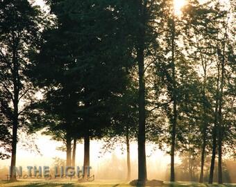 Foggy Morning - fine art photography