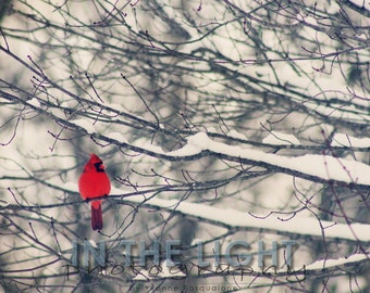 READY TO SHIP - Cardinal in Snow #1 - Indiana winter fine art photography