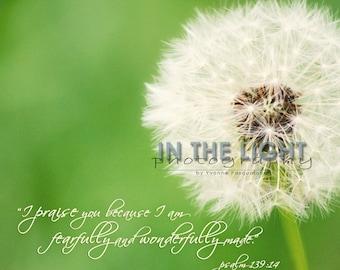 White Dandelion - Psalm 139:14 - fine art photography - Square 5x5, 8x8, 12x12, 16x16