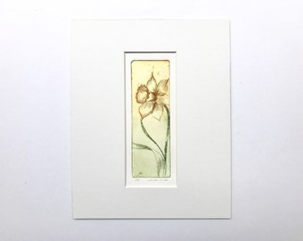 original color etching of a daffodil