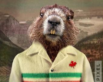 Canadian Hudson Bay Coat beaver groundhog print - 5x7 to 24x30 - canada art