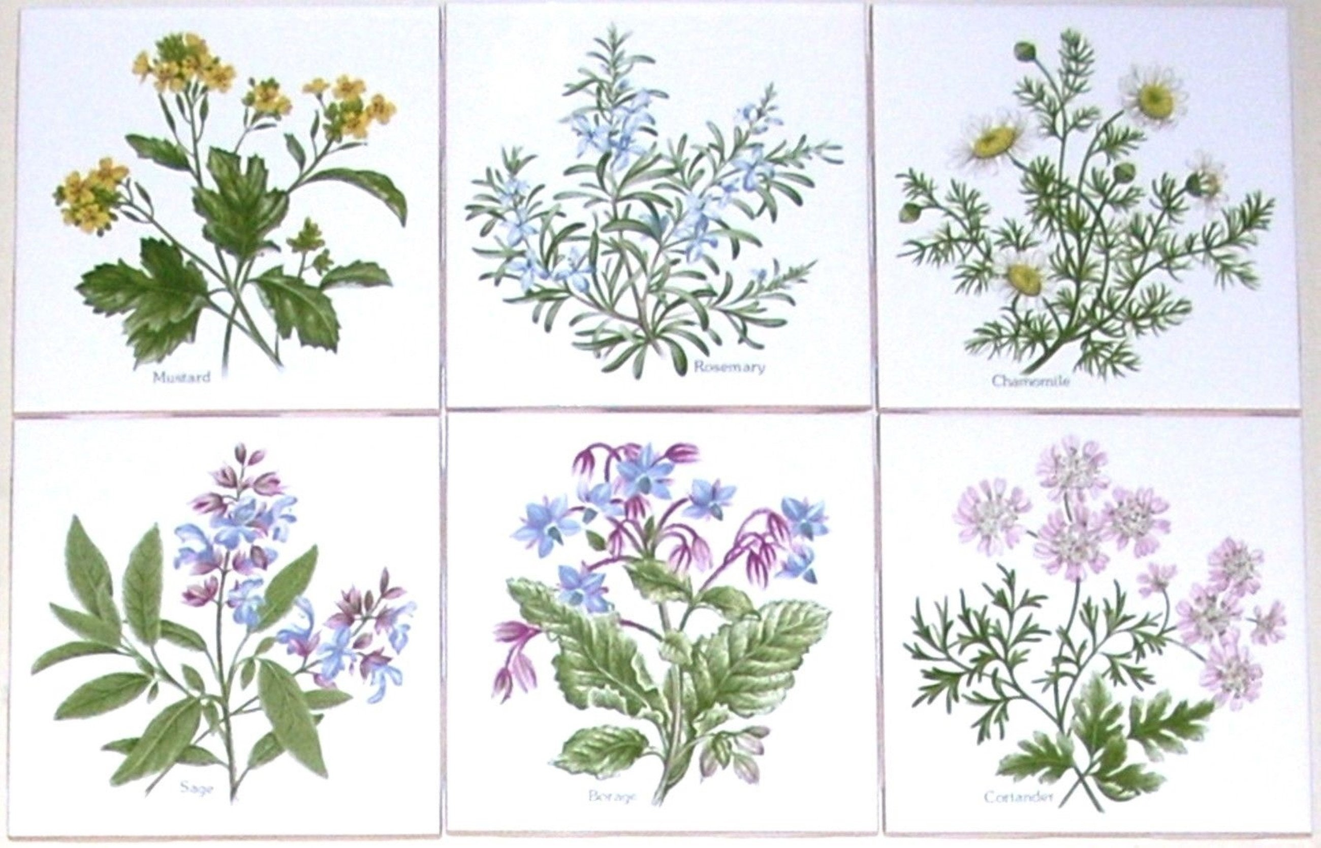 Herb Ceramic Tile 4.25 Sage Borage Rosemary Mustard