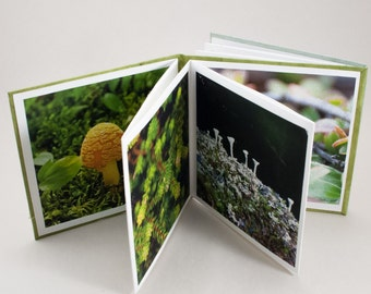 Artist Book / Photography Book / Dos a Dos / Nature Photography / Limited Edition / Archival and Ephemeral