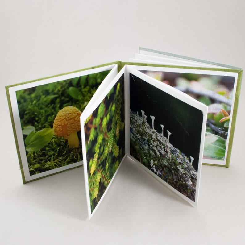 Artist Book / Photography Book / Dos a Dos / Nature image 0